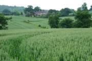 Wheatfield near Willey, Shropshire