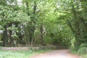 Woodland fringe of Selaby estate