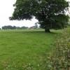 Oak by the footpath