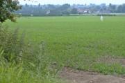 Fields near Hessle Mount