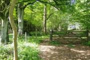 Entering Overley Wood