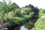 The River Maun