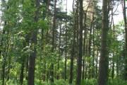 Woodland south of Ashley Heath