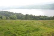 View across woodland to Llyn Tegid