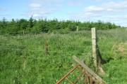 Woodland east of Lunderton