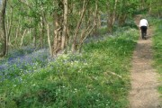 Bluebell woods above Mordiford