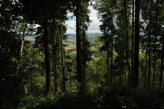 Nupton Hill Wood
