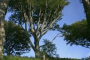 Woodland, Taynish