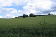 Wheat and folly
