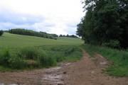 Wheat, copse and streamside track