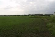 Sproatley Farmland