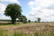 Farmland near Elmsett