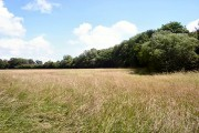Borley's Wood