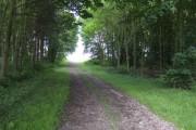 Track through woodland at Bourne End, Bedfordshire