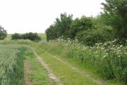 Wheat field, bridleway and cow parsley