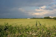 Farmland off Gunthorpe Road