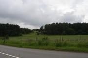 Woodland close to Ludworth