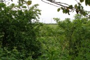 A glimpse of farmland through the trees