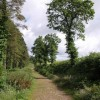 Winkleigh Wood