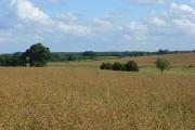 Farmland, Kimpton