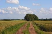 Wheat, Penton Mewsey