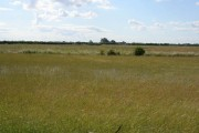 Fenland fields
