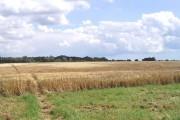 Farmland near Boxted