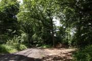 Bringer's Park Plantation