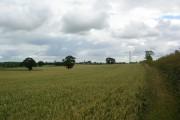 Cornfield at Walton Gates