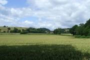 Wheat Field near Bourton, Shropshire
