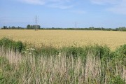 Farmland near Sarre Wall, Chislet Marshes