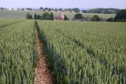 Wheat and Trottiscliffe church