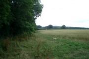 Wheat field at Underley Farm