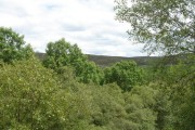 Native Woodland in Strathnaver