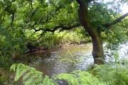 River Maun