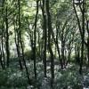 Woodland below Wood Bottom Lane, Hove Edge, Brighouse