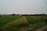 Strip Farming near Churchtown