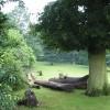 Felled timber, Beavan's Hill