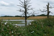 Flooded farmland