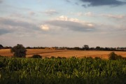 Fields at Gosbeck