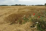 Harvested field near Heath Road