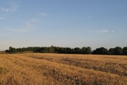 Barley and A5