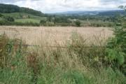 Corn field near The Wonder