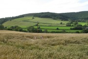 Teme Valley wheat