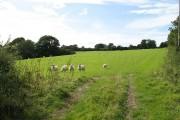Limestone pastures