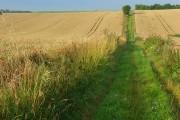 Farmland, Allington
