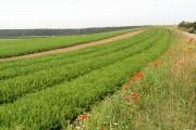 Field side flora.