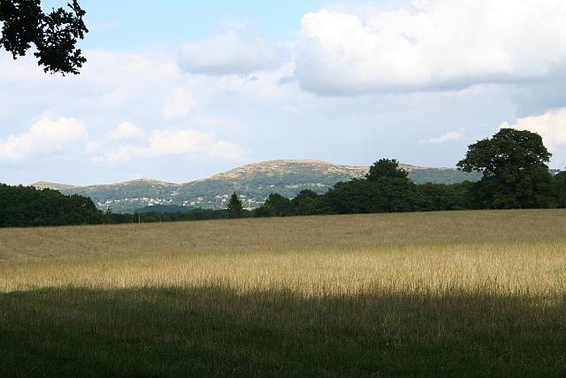 Pasture near Stoneyard Green