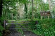 Top Wood near Portglenone