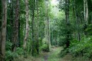 In Top Wood near Portglenone